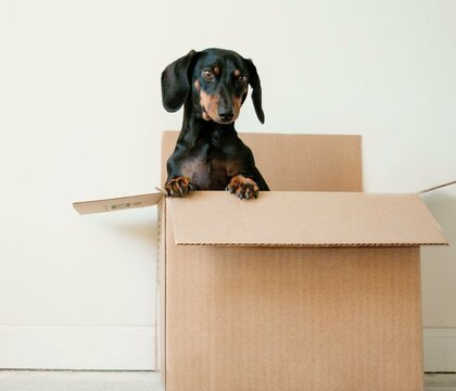 Moving with Pets Compas International Movers